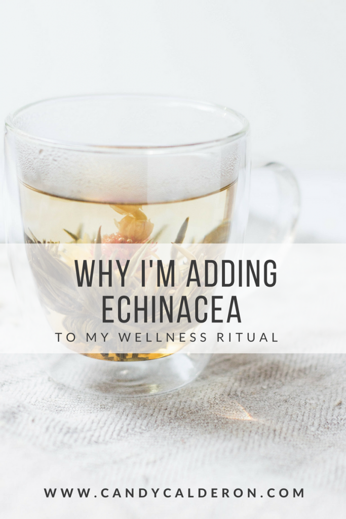 "I started researching about the medicinal benefits & healing properties of ""Echinacea"", a plant I've seen mostly in teas, but confess I had never stopped to research more about its benefits — until now, and I'm glad I did!"
